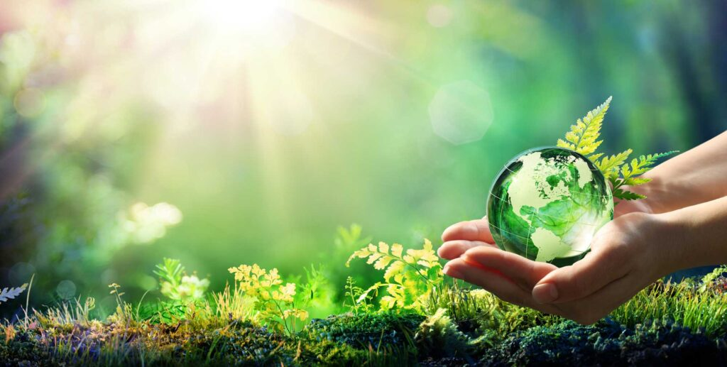 Environmental image showing a forest with sunlight and ball of water